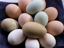 12 Hatching Eggs Cream Legbar Leghorn Welsummer Cochin Bantam Sussex Rhode Buff