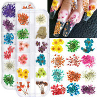 12 Colors Real Dried Flowers 3D Nail Art Decors DIY Nail Tips Manicure Box Set