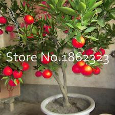 Red Lemon Organic Seeds Plants Fruit Dwarf Bonsai Tree Garden Rare Home 50pcs