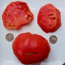 Marianna's Peace - Organic Heirloom Tomato Seeds - Great Beefsteak - 40 Seeds