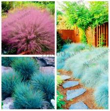 100 Pcs Seeds Fescue Grass Home Garden Fesnea Glauca Ornamental Bonsai Plants N