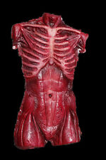 Skinned Male Torso - Haunted House - Halloween Prop - The Walking Dead Corpse