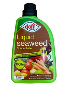 Doff Liquid Seaweed Concentrate Organic Plant Food  Vegetables Feed 1 Litre