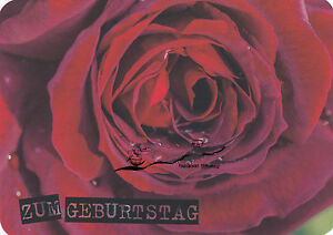 Kunstkarte: Zum Geburtstag - rote Rose