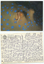 20548 - Augen eines Blaupunkt-Rochen - alte saudi-arabische Ansichtskarte