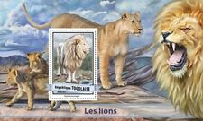 Togo 2017 MNH Lions Lion 1v S/S Big Cats Wild Animals Stamps