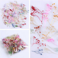 Fashion Mixed Dried Flowers Nail Art DIY Women Girl Decor Flower Manicure Crafts