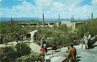 Postcard Arizona Sonora Desert Museum Tucson