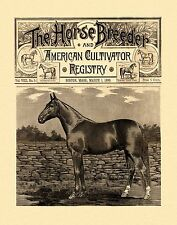 Horse Breeder Antique Magazine Cover 11x14 Poster Art Western Cowboy Rodeo MAG54