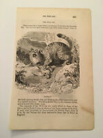 K84) View of The Wild and Domestic Cat Animal Kingdom 1870 Engraving