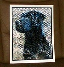 Amazing Chocolate Black Labrador Retriever Dog Montage