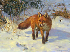 Fox in the Snow, Christmas cards pack of 10 by Frederick Haycock C503X