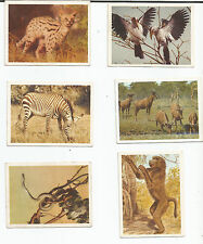 SOUTH AFRICAN natl park;vintage cigarette CARDS-lot of 6+MANY OTHERS  (see list)