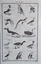 RARE LARGE 1785 ANTIQUE ENGRAVING - BIRDS - OWL, RED SHANK, PENGUIN, GOOSE, DUCK