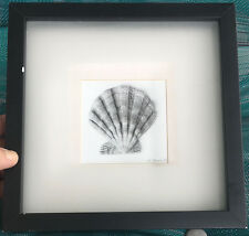 TWO FRAMED SHELL PHOTOS BY D. ZACCONELLI  IN SHADOW BOXES