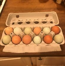 2 Dozen Farm Fresh Chicken Eggs Free Range Non Gmo Grass Fed