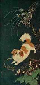 A4 Photo Chen Lin Shen 1427 1509 Modern Pekingese Dogs of China & Japan in Natur