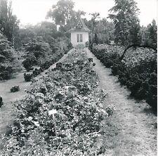 PLANTES - FLEURS  c. 1950 -  Végétaux  Lot 56 Photos  - GL11