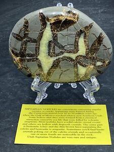 Septarian Nodule, Dragon Stone, End Cut ( Utah )Description Card & Stand