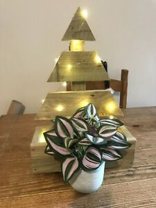 Handmade rustic wooden christmas tree with planter treated timber indoor/outdoor