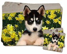 Siberian Husky by Daffodils Twin 2x Placemats+2x Coasters Set in Gif, AD-H67DAPC