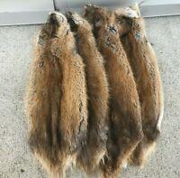 1 - Tanned Midwestern muskrat pelt, premium grade prime (muskpremo)