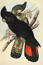 John Gould Native  Birds print black cockatoo painting Vintage A3 Australia