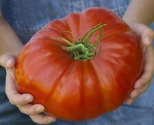 Vegetable - Tomato - Gigantomo - 250 Seeds - Bulk