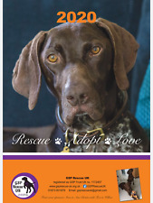 German Shorthaired Pointer Rescue UK 2020 Calendar-posted mid Nov 2019 & onwards