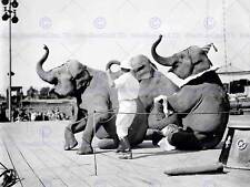 CIRCUS VINTAGE PHOTO ACT TROOP ELEPHANT TRUNK SIT DOWN USA PRINT POSTER BB7709