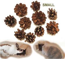 10 Organic Pet Chew Toy UK Extra Small Wood Pine Cones Hamster Gerbil Mice Rat