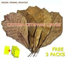 20 Indian Almond Leaves, Premium A+ Catappa Ketapang for Aquarium Fish & Shrimp