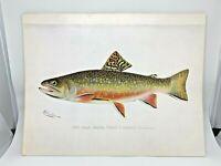 Original Antique Denton Fish Print Brook Trout Male