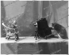 Vintage photo-Cats-Photography-Spectacles-8x10 in.