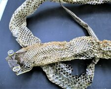 Five and A halve Feet 5 1/2 Feet Chicken Snake Skin Shed Oddities