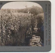 Corn Field in Kansas Stone Wall KS Keystone Stereoview c1910