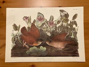 VINTAGE J.J.AUDUBON PRINT KEY WEST DOVE NO.34 PLATE CLXVII R. HAVELL UNFRAMED