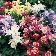 MIX Aquilegia Flower Seeds 20 Seeds SFS- 1001