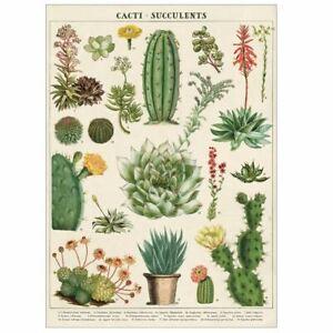 Cavallini Cacti Succulents Vintage Poster   Wall Art Print Craft Decoration