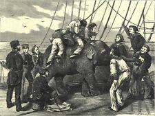 TOM, THE DUKE OF EDINBURGH'S ELEPHANT 1872 Henry Woods VICTORIAN ENGRAVING