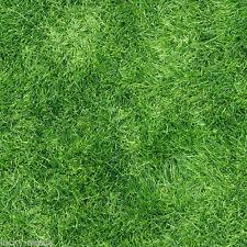 "Pensacola Bahia Grass Seed ""Premium Grade"" 2 Lbs."
