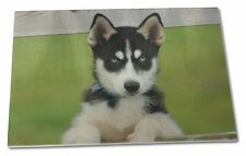 Husky Puppy Dog Extra Large Toughened Glass Cutting, Chopping Board, AD-H67GCBL