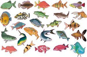 "25 X Tropical fish shower screen stickers bright full colour print 3"" each fish"