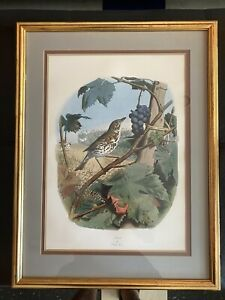 "Beautifully Framed Fine Art Bird Print (""Thrush"") by EDOUARD TRAVIES"