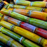 Sweet Natural Sugar Cane 100 Pcs Seeds Bonsai Saccharum Officinarum Garden Fruit