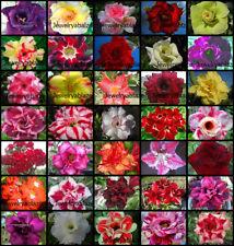 """Adenium Obesum Desert Rose """"separate and label """" 1,109 """"  Seeds 35 Types!"""