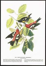 1930's Old Vintage Audubon Limited Ed. White Winged Crossbill Bird Art Print