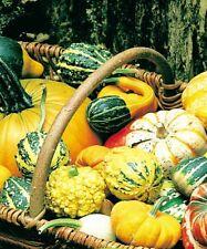 Mixed Toys pumpkin seeds Ornamental Melon seed organic heirloom home garden