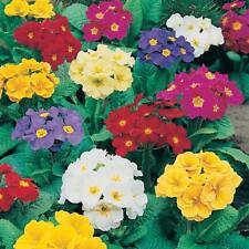 Pack x12 /'Mixed Varieties/' Garden Perennial Plug Plants Starter Pack