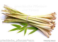 🔥🌿 Zitronengras *** für die asiatische Küche *** 100 Samen